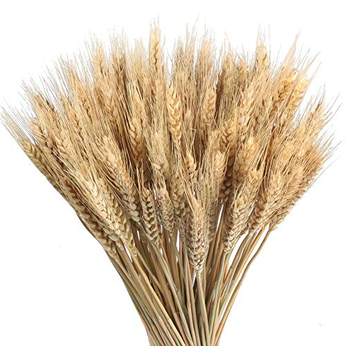 HUAESIN 100Pcs Natural Dried Flowers Bouquet Dried Wheat Dried Wheat Spikes Decoration Artificial Wheat Grass Artificial Flower for Vases Home Wedding Party Office Balcony Indoor Outdoor