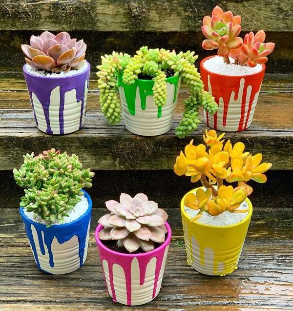 succulents in colorful pots