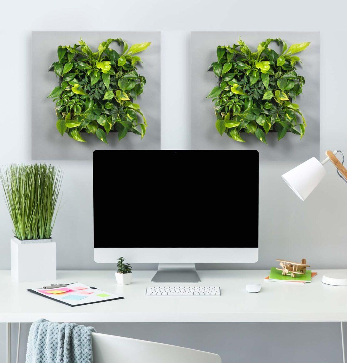 vegetable-frameworks 1