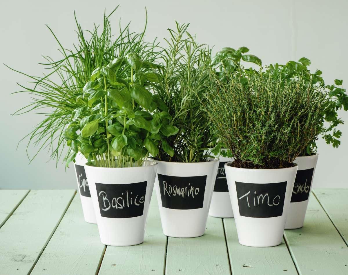 asa-selection-catalog-jars-aromatic-plants
