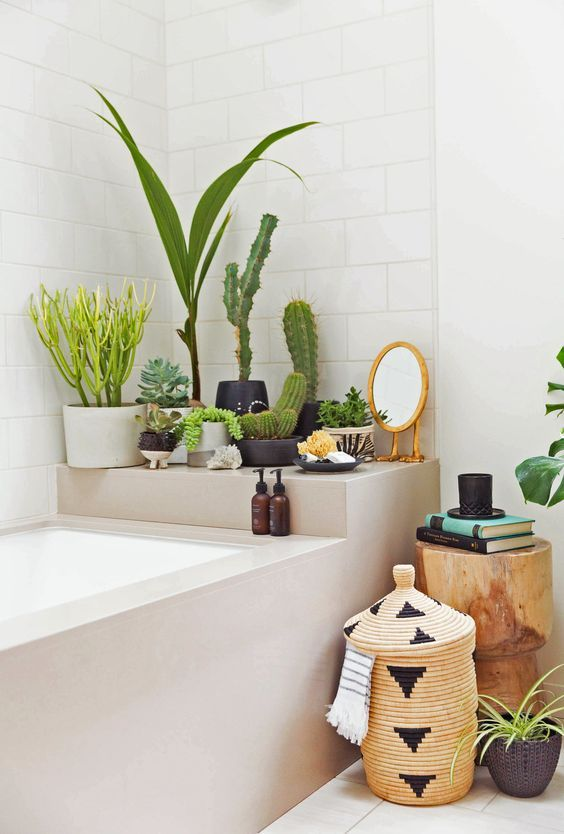 Decorate the bathroom with succulents