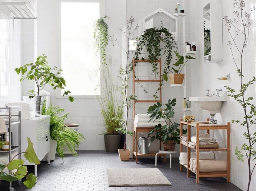 decorate the bathroom with plants